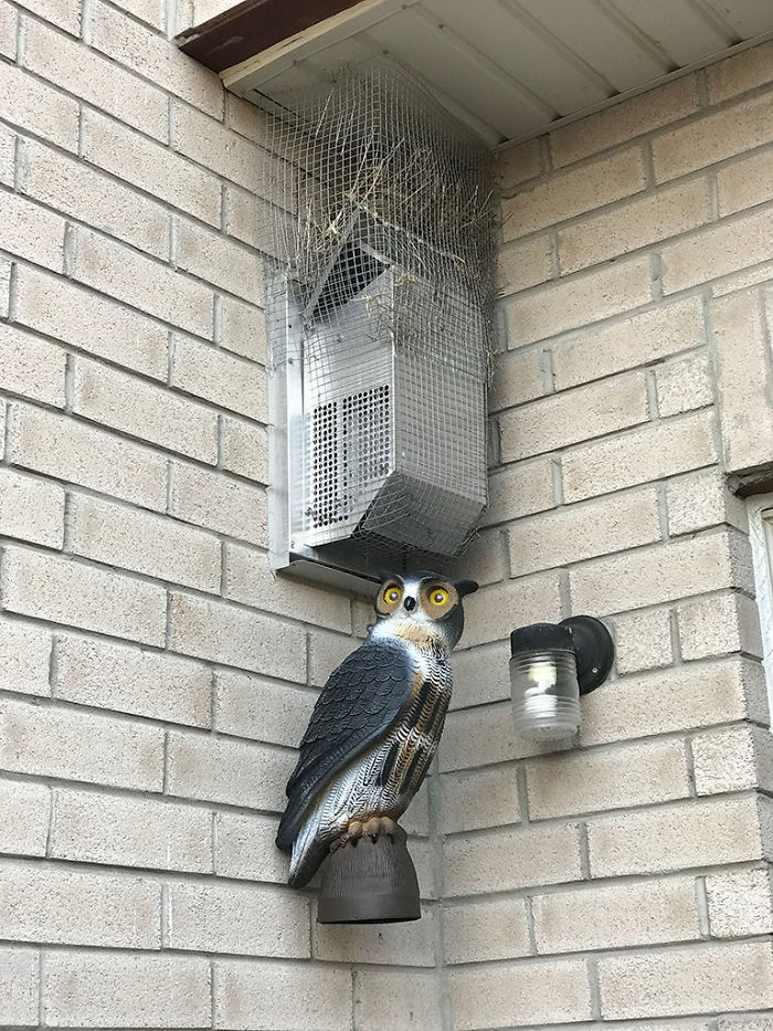Un homme tente de se battre contre des oiseaux pendant 4 ans et c'est de plus en plus drôle à chaque image