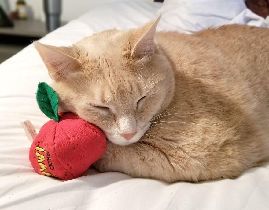 On est tombés amoureux de ce chat de 15 kilos, alors on a décidé de l'adopter et de l'aider à perdre du poids