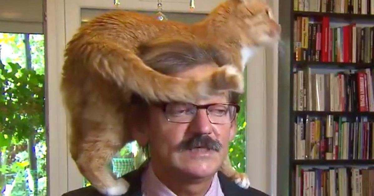 La façon dont ce professeur polonais «réagit» lorsqu'un chat interrompt son entrevue sérieuse amuse les internautes