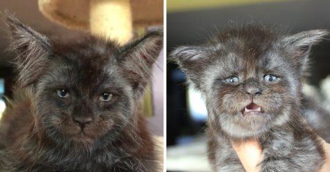 Voici Yana, la chatte à deux visages dont les parents ont manqué d'encre