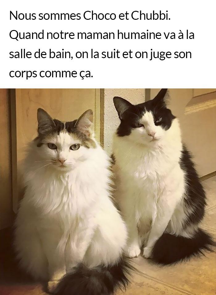 22 fois où des enfoirés de chats ont été humiliés publiquement pour leurs crimes ridiculement horribles