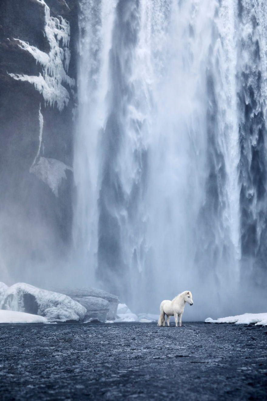 25 photos féeriques de chevaux islandais vivant dans des conditions extrêmes