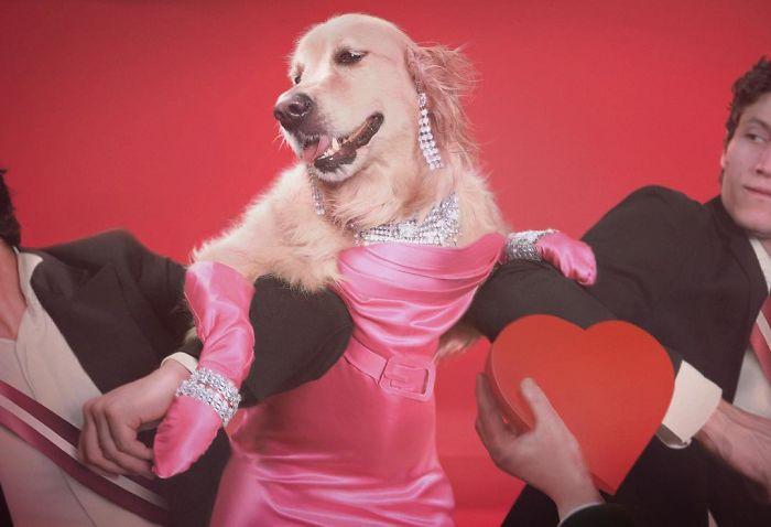 Ce chien a reproduit les photos légendaires de Madonna, et l'attention aux détails est incroyable