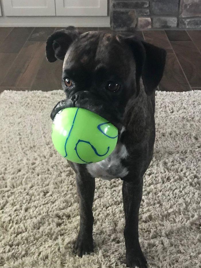 23 photos hilarantes qui prouvent que les boxers sont les chiens les plus étranges et les plus adorables