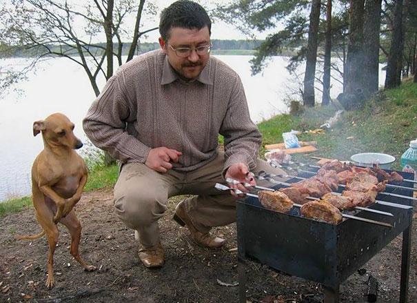 33 photos drôles de chiens qui mendient de la nourriture auxquels vous ne pourrez pas dire non
