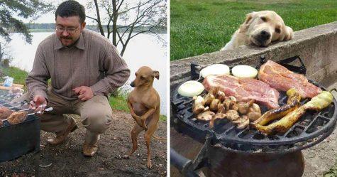 Un homme donne à manger à une chienne affamée, mais elle refuse de manger, alors il décide de la suivre…
