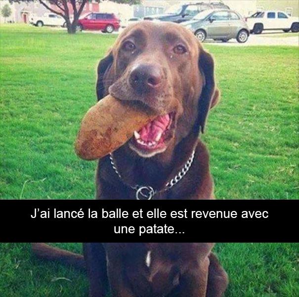 33 chiens maladroits qui vont te faire rire