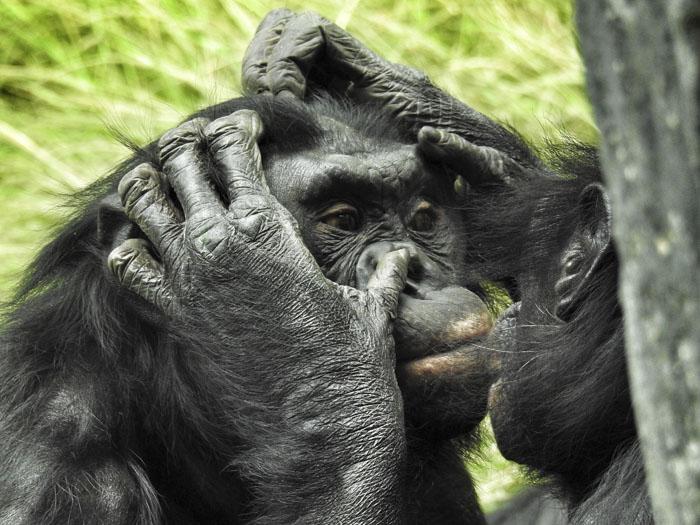 Cette guide de zoo a révélé les 16 faits sur les animaux les plus intéressants qu'elle a appris à son travail et on en veut d'autres