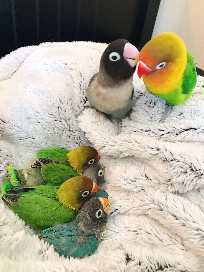 Kiwi et sa petite amie gothique viennent juste d'avoir 4 bébés, et les internautes sont en amour