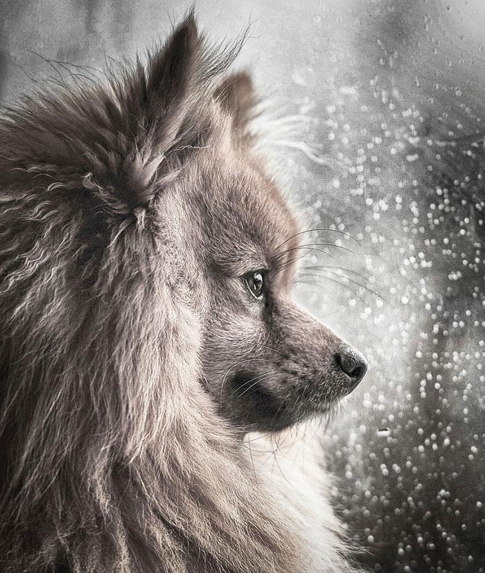 Les meilleures photos de chiens de 2018 viennent d'être annoncées, et elles vont vous donner des papillons dans le ventre