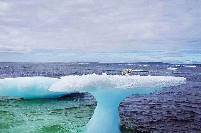 Des pêcheurs pensaient avoir trouvé un phoque au sommet d'un iceberg, alors ils ont décidé d'y regarder de plus près