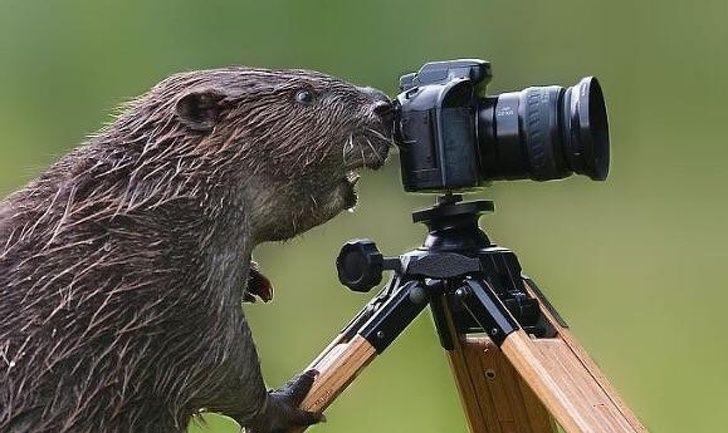 22 photos d'animaux prises au parfait moment
