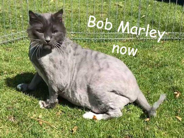 Quelqu'un a abandonné un chat en très mauvais état dans un refuge pendant la nuit, mais après avoir rasé sa fourrure, ils ont découvert une vraie beauté