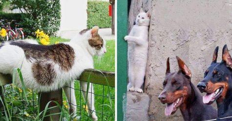 22 fois où les chats nous ont fait sourire d'une oreille à l'autre