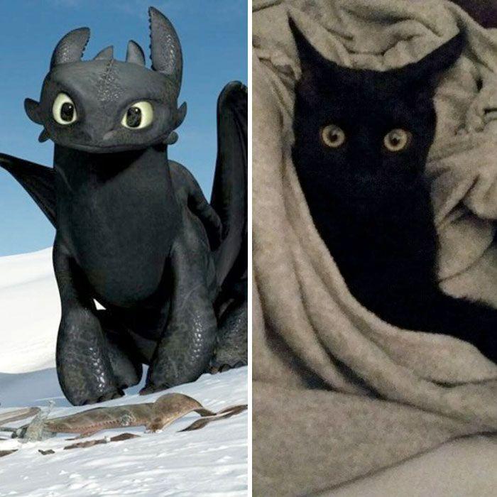22 chats noirs qui sont réellement Krokmou déguisé