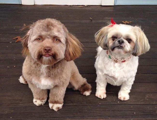 18 chiens qui ressemblent à des humains (ils vont vous faire craquer, c'est garanti)