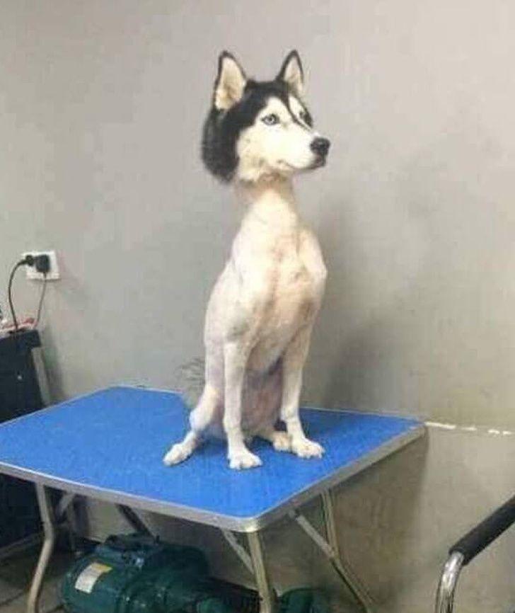 17 fois où des coiffures d'animaux de compagnie ont si mal tourné que vous allez dire «Mais à quoi ces gens ont-ils pensé?!»