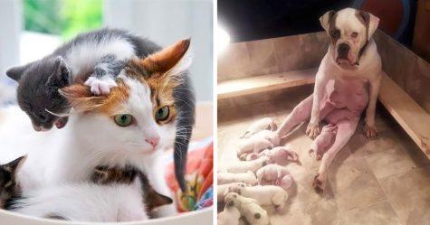 20 expressions d'animaux qui résument parfaitement la vie d'une maman