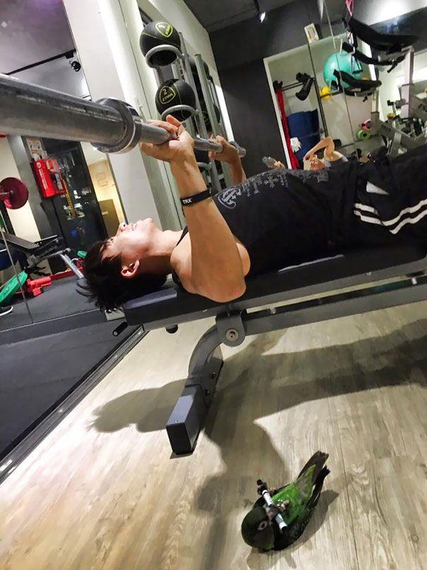 25 fois où des gens n'en croyaient pas leurs yeux au gym