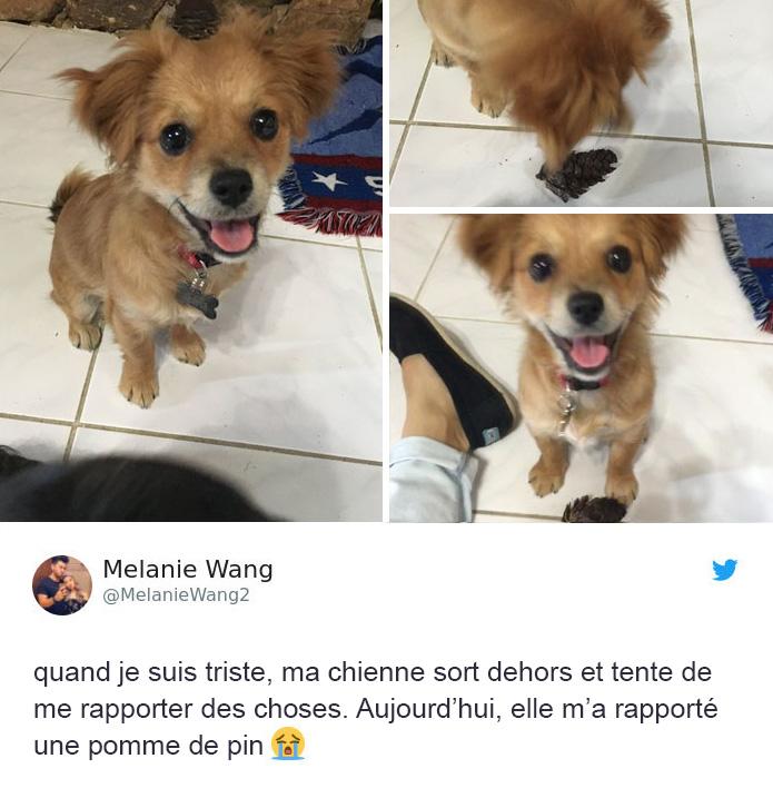25 blagues sur les chiens que tous les propriétaires de chiens devraient lire au plus vite