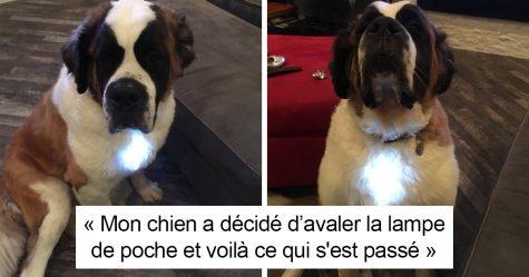 25 photos de chiens si drôles qu'on vous défie de ne pas rire