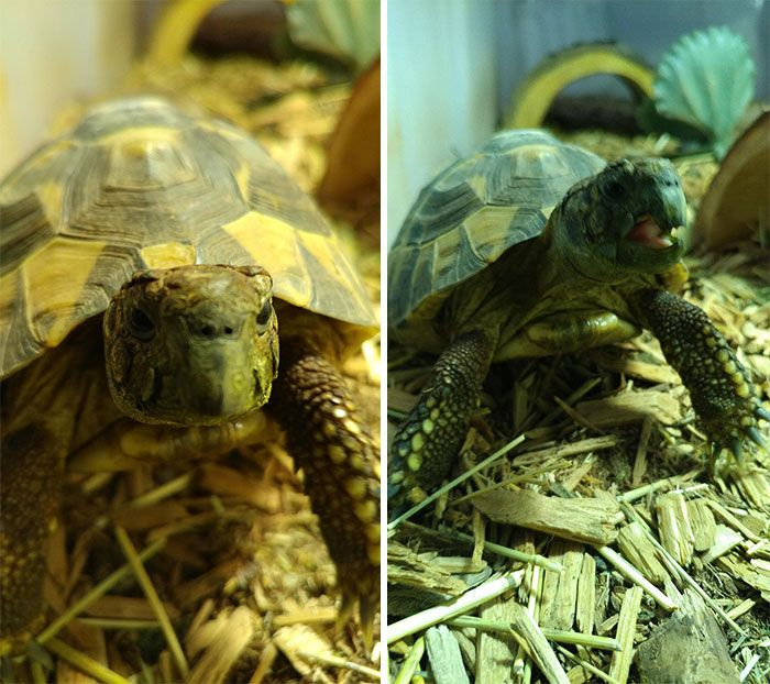 Des gens publient des photos de leurs animaux avant et après les avoir traités de bons garçons (30 photos)