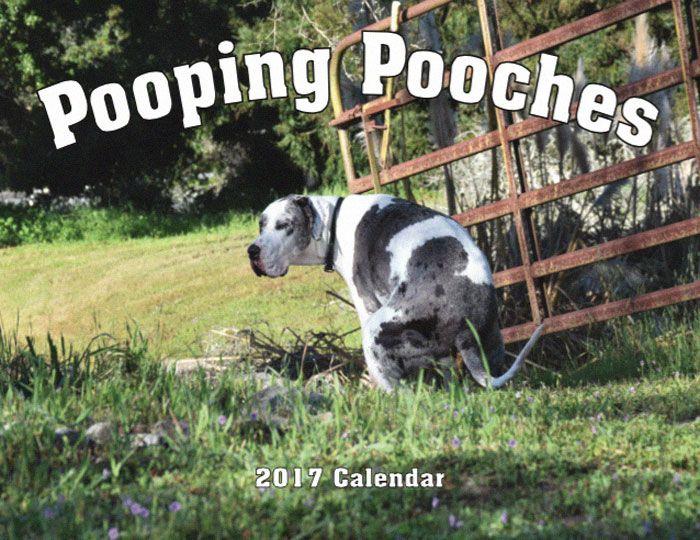 Le calendrier des chiens qui font caca 2019 est arrivé et c'est le calendrier le plus merdique de l'année