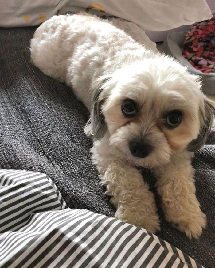 Cette chienne a volé le dentier de son propriétaire pendant qu'il dormait et la suite est trop drôle