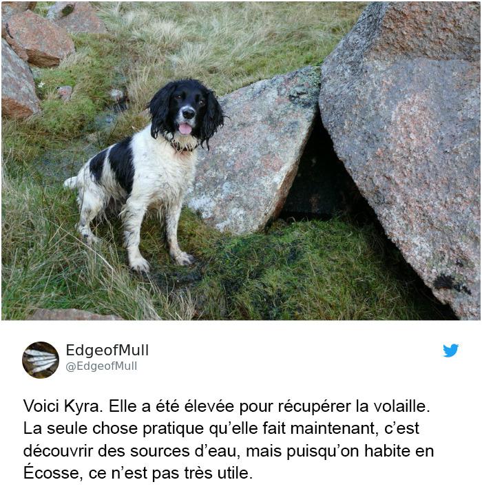 10 chiens qui ont été élevés pour un seul travail, mais qui ont réussi à tout faire sauf ça