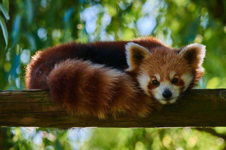 20 faits sur les animaux qui vont te faire dire «Onnn!»