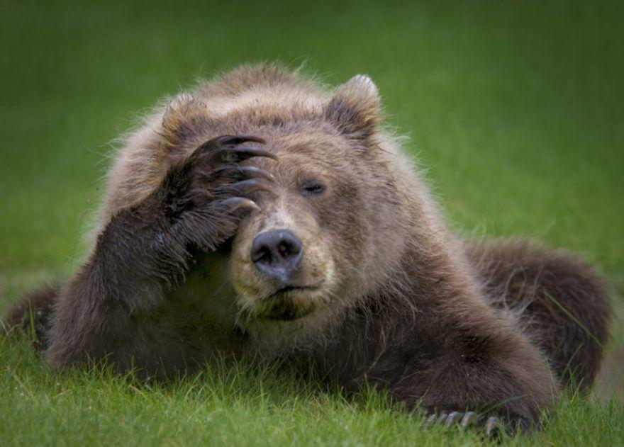 Les 41 photos d'animaux sauvages les plus drôles de l'année viennent d'être annoncées et elles vont vous faire rire