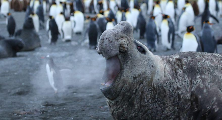 Les 41 photos d'animaux sauvages les plus drôles de 2018 viennent d'être annoncées et elles vont vous faire rire, c'est garanti