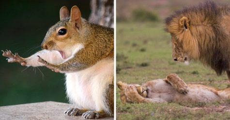 13 des plus hilarantes photos d'animaux sauvages de tous les temps