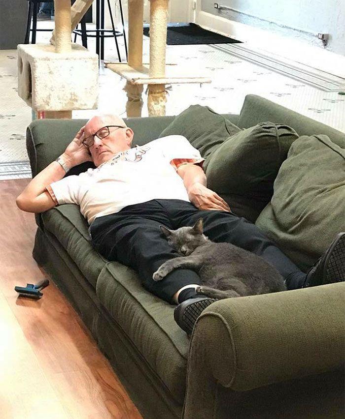 Les internautes sont en amour avec cet homme qui fait du bénévolat et fait la sieste avec des chats dans un refuge tous les jours