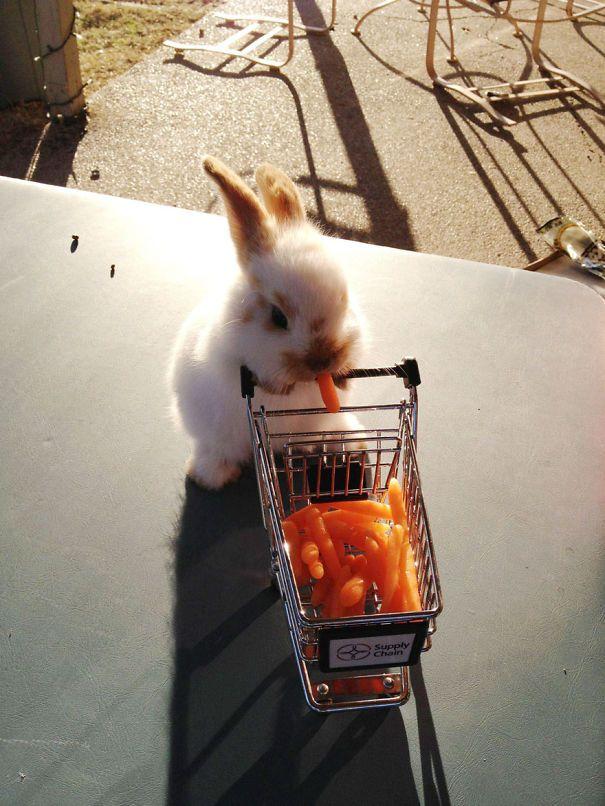 22 lapins les plus mignons de tous les temps