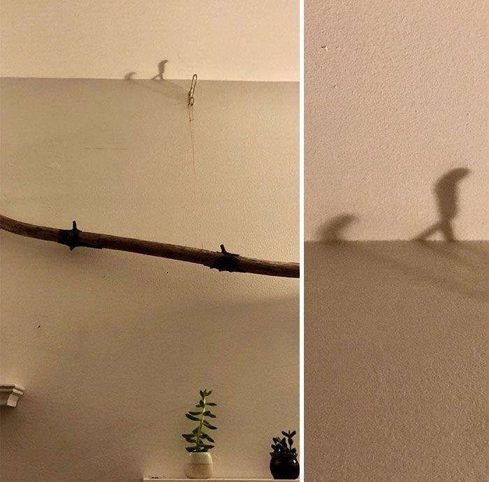 30 ombres étonnantes qui vont vous y faire regarder à deux fois (nouvelles images)