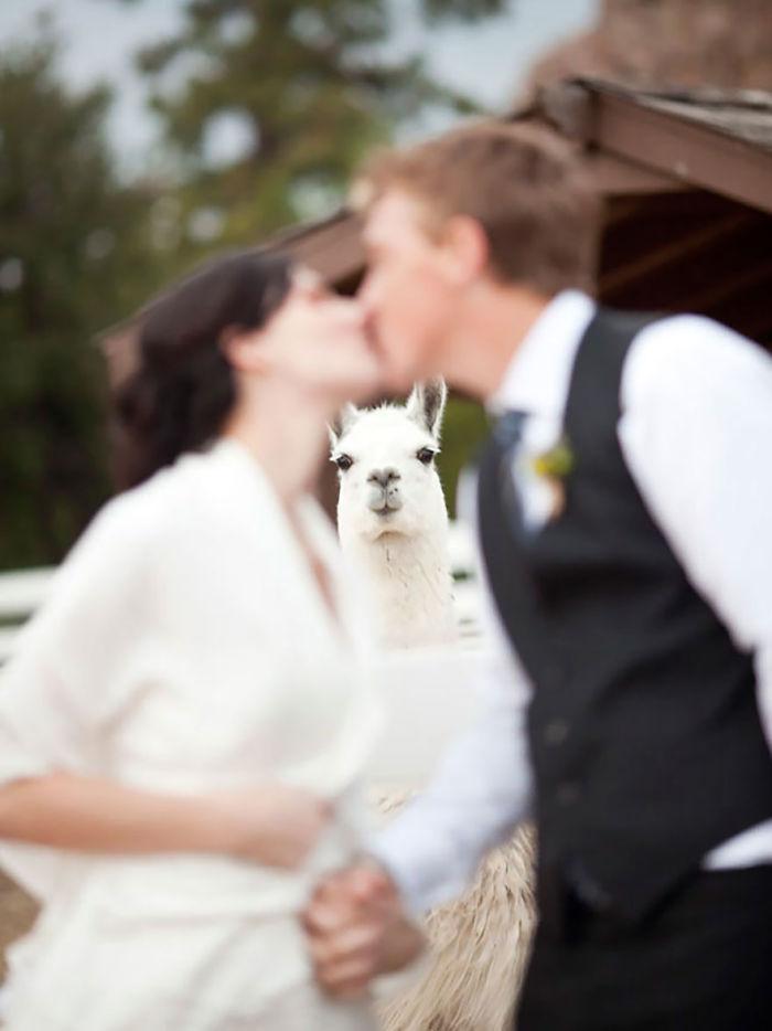 Les internautes sont morts de rire après avoir vu la réaction de cet ours à ce couple qui se mariait au zoo