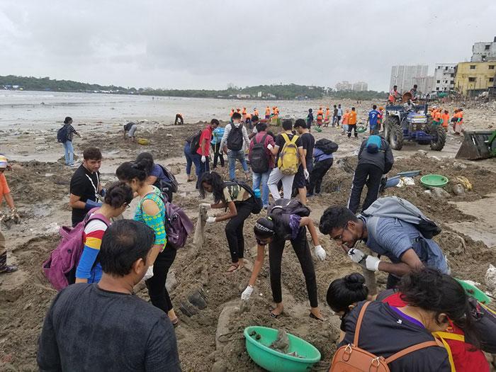 Des tortues sont retournées sur cette plage indienne pour la première fois en 20 ans après le plus grand nettoyage au monde