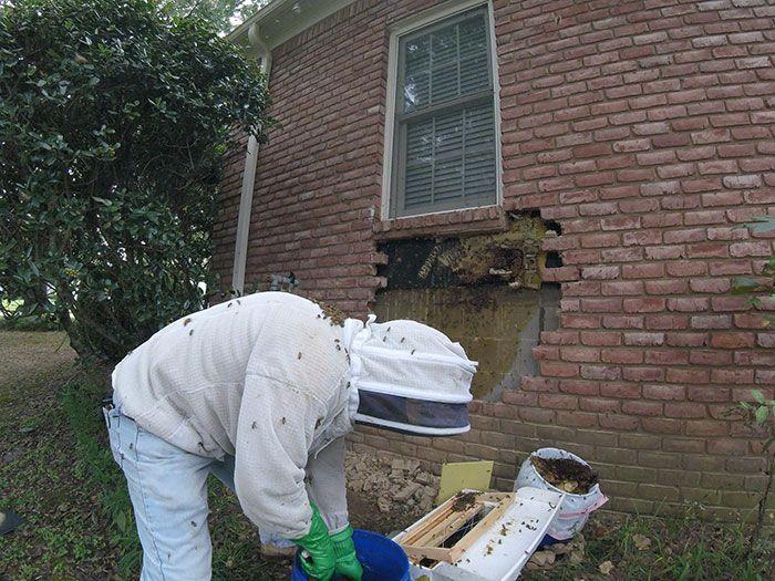 Cet apiculteur a montré ce qu'il a trouvé après avoir enlevé des briques de la maison d'un client et ses photos sont devenues virales