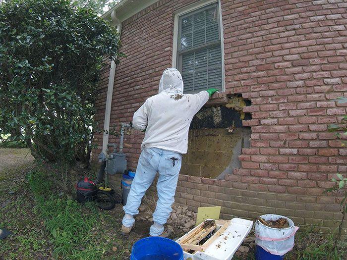 Un apiculteur publie ce qu'il a trouvé après avoir enlevé des briques de la maison d'un client et ses photos deviennent virales