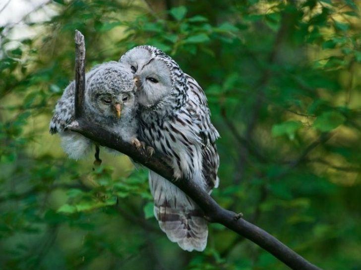 19 animaux amoureux qui vont faire fondre même les coeurs de glace (nouvelles images)