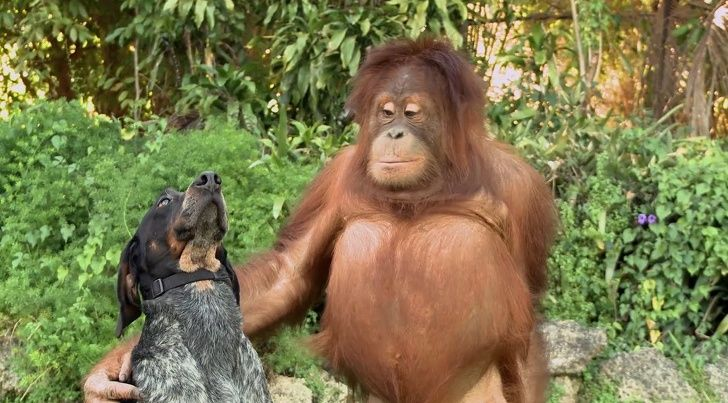 19 animaux qui ont fait fondre notre coeur par leur tendresse