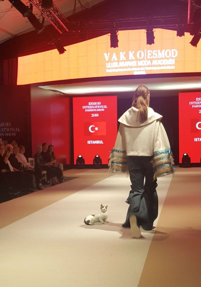 Un chat mignon s'est incrusté dans un défilé de mode et a commencé à chercher la bagarre avec les mannequins