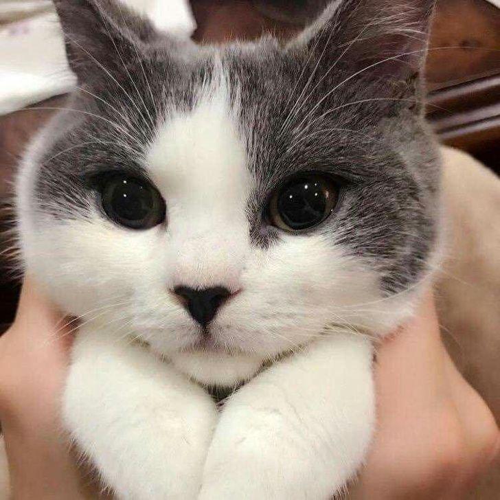 25 photos qui prouvent que les chats sont les êtres les plus mignons de la planète