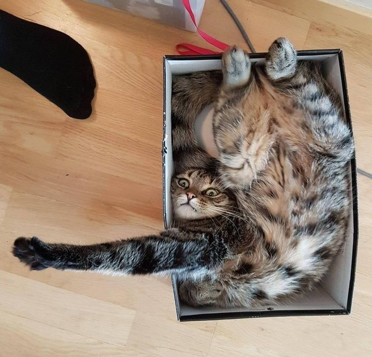 23 fois où les chats ont prouvé qu'ils peuvent rentrer n'importe où