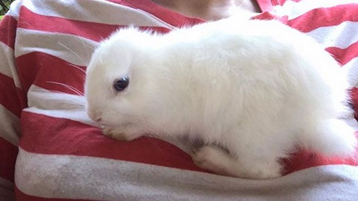 Cette lapine née sans oreilles a reçu la plus adorable paire d'oreilles tricotées de sa propriétaire