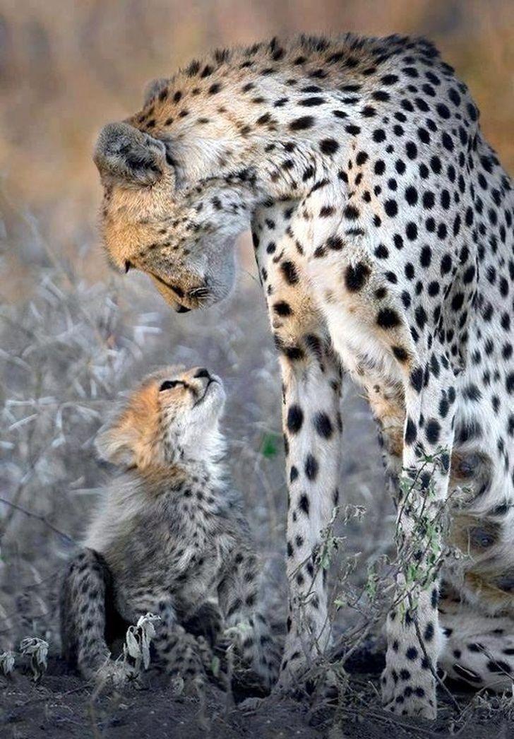 21 photos d'animaux qui prouvent qu'il n'y a rien de mieux que l'amour d'une maman