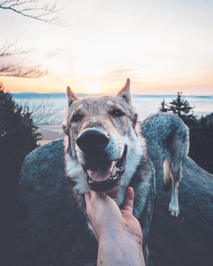 Vous êtes tanné des photos Instagram #FollowMeTo? Ce gars flatte son chien partout où il va et c'est mille fois mieux