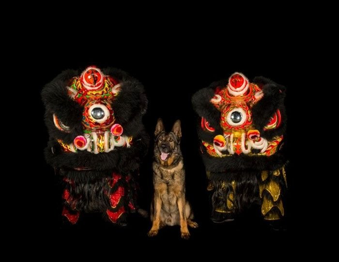L'unité canine de la police de Vancouver vient de publier son calendrier de charité 2019 et il déchire