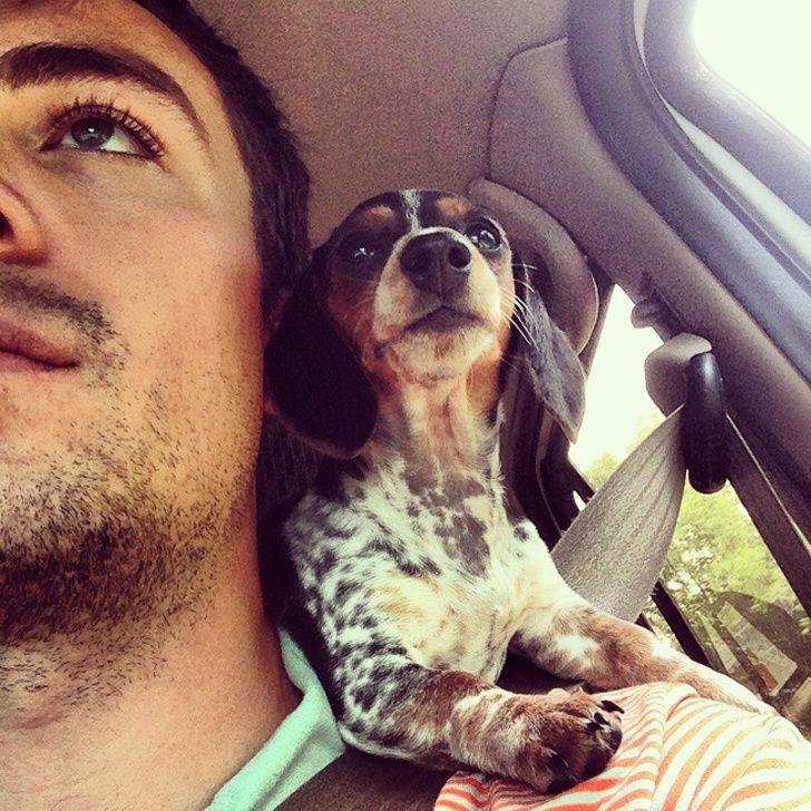 24 bonnes raisons d'adopter un teckel immédiatement